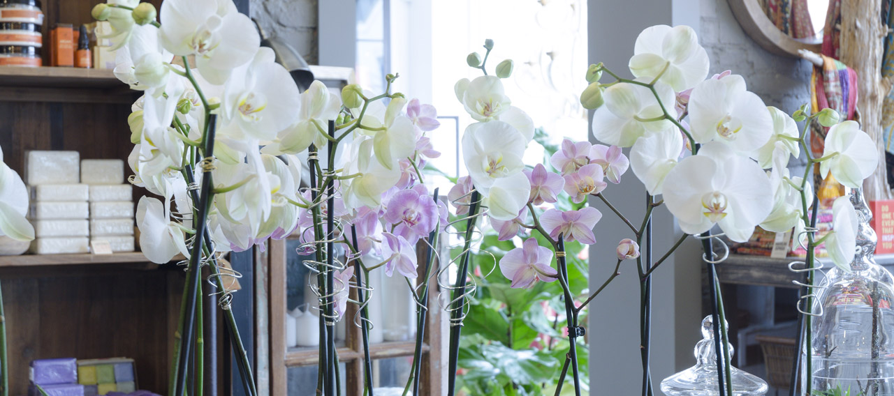 Centro Garden Space Banners Orchids