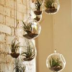 Centro-Garden-Air-Plants
