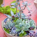 Centro-Garden-Succulent-Workshop