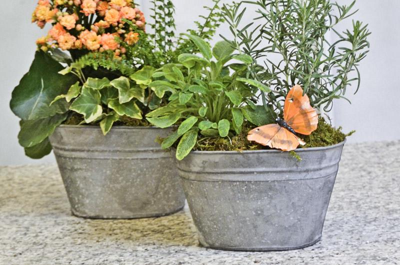 Centro Garden Workshop Centrepieces