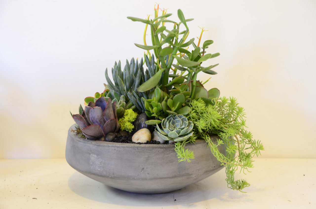 Workshop Succulent