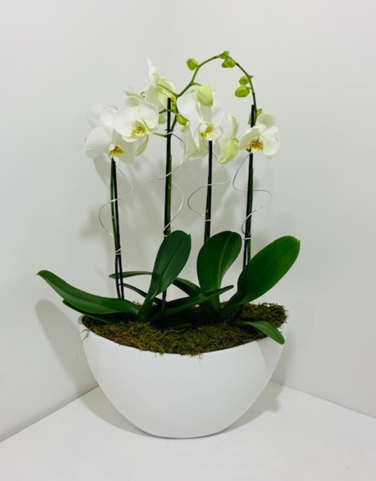 Orchid Arrangement, Great gift idea for her.